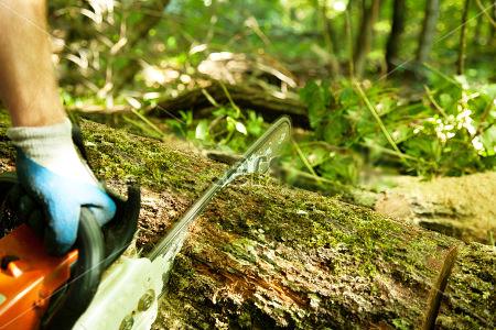 delovna_nesreca_v_gozdu